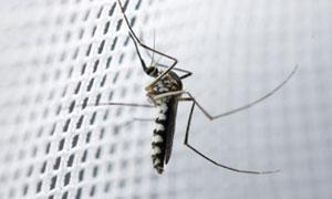 Mosquito Nets in Kenya